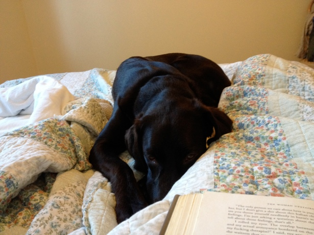 Morning - reading in bed and a dog.