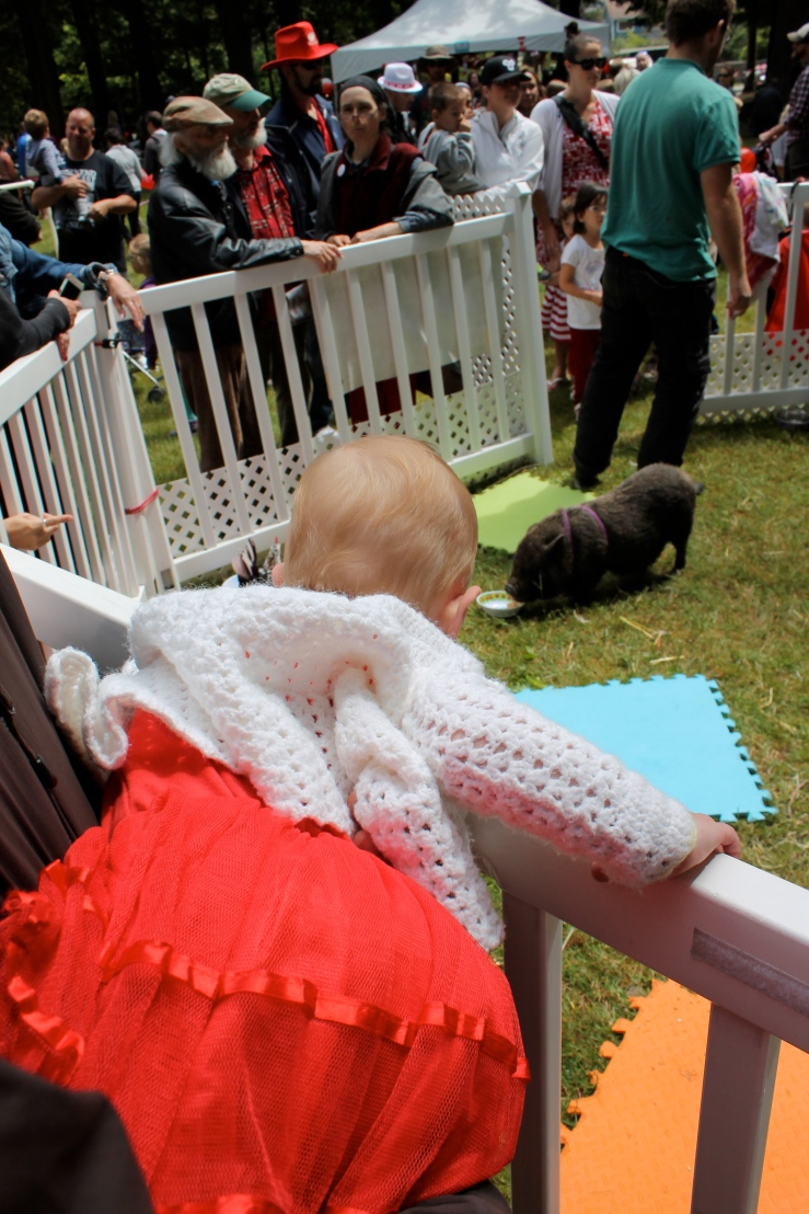 Pearl tried to climb into the petting zoo enclosure. She really wanted to grab that pig.